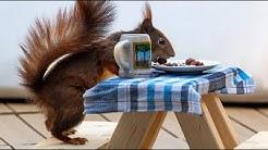 Tierische Freude: Auch Eichhörnchen eröffnen Biergarten-Saison