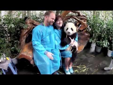 фото панда секс