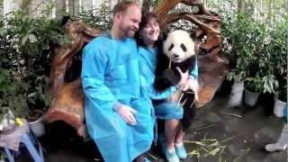 Panda Photo Shoot