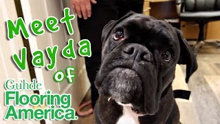 This DOG gives tours of Guhde Flooring America! | Mimi Magazine