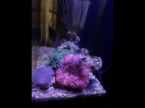 Nano marine reef tank sri lanka