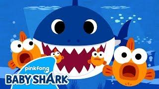 Łóó' Hashkéii Awéé' | Baby Shark Navajo | Navajo Nation | Sing with Baby Shark