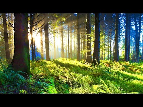 Positive Relaxing Music for Stress Relief. Soothing Music for Meditation, Healing Therapy, Sleep