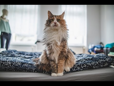 Youtube Best Videos For Cats