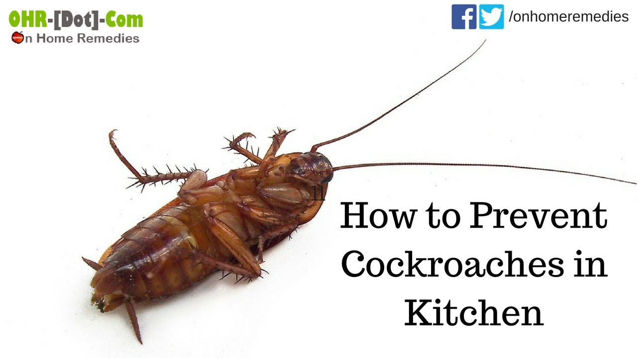 How to Prevent Cockroaches in Kitchen   5 Home Remedies - YouTube