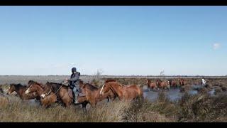 Comprendre la dynamique du troupeau-transhumance