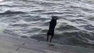 Собака лает на волны