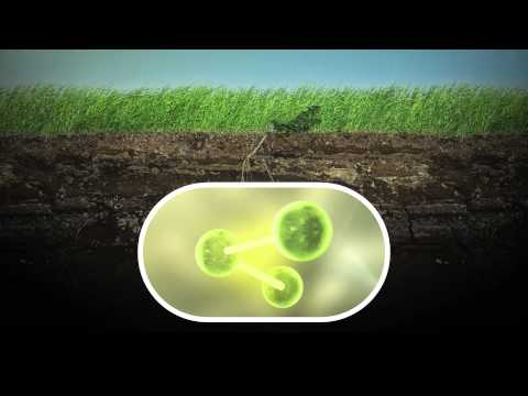 Organic vs Non Organic Pesticides: Is Organic Really Better for the Environment?