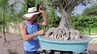 How to Properly Fertilize Bonsai in Florida - Agresta Gardens