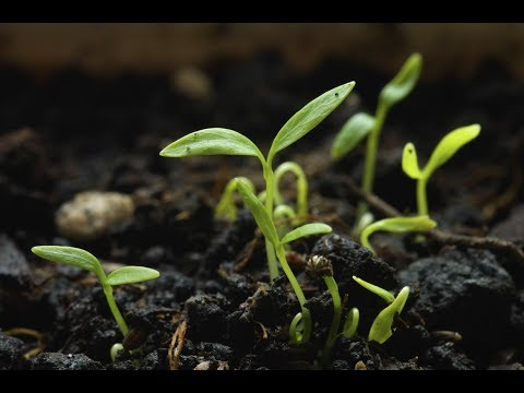 6 Major Tips To Start Any Seed -Complete Guide  Kitchen Gardening