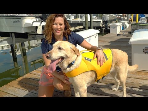 Tips For Choosing The Right Dog Life Jacket