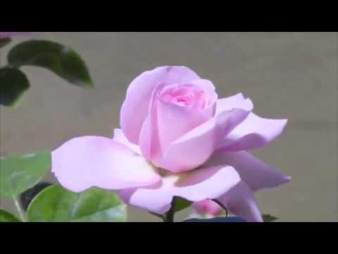 Love Letter - Georgia Matthews
