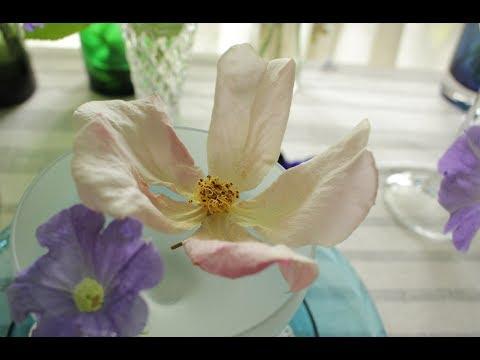 小さな窓の花ごよみ 590 薔薇のうた ♪ ココ:つのだたかし ♪