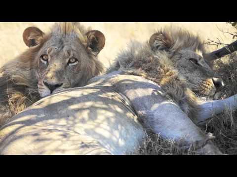 Wildlife Photography Workshop / Wildlife Photography Tour - African safari in Botswana