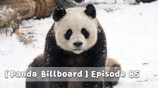 【Panda Billboard】Episode 85 | iPanda