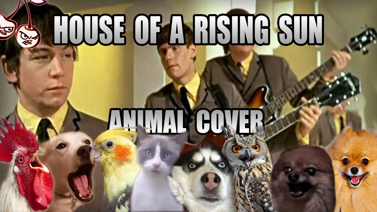 House of a rising sun but it's literally (the) animals
