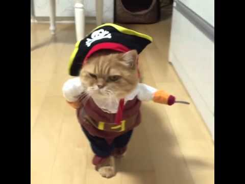 0ec95db6f94 Pirate cat! Pirates of the Caribbean costume 🐱 - YouTube