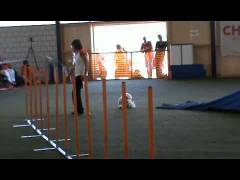 PAWC 2010 - Angela Kohan et Kocos - Agility samedi