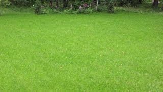 Посев газонной травы своими руками(Что нужно для посева газонной травы, небольшие советы и рекомендации., 2016-04-24T16:27:51.000Z)
