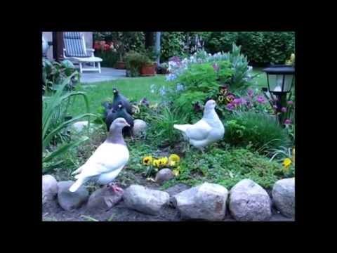 how to stop pigeons pooping in your garden