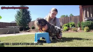 Explained: Forward Somersault Roll Trick, dog tricks method 1