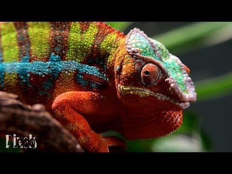 [4K] Amazing Nature - Samsung Urtra HD Sample Video 60fps (2160p)
