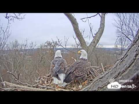 2018 - Hanover, PA Bald Eagles - New Live Cam View!