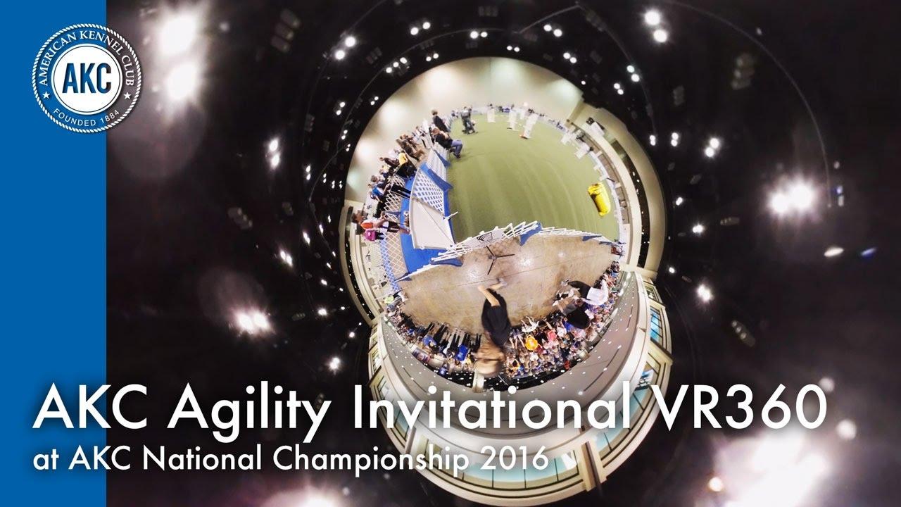 Akc Agility Invitational At Akc National Championship 2016 Orlando