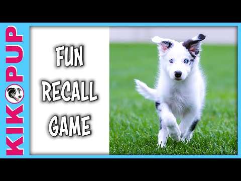 FUN RECALL GAME - puppy training come recall