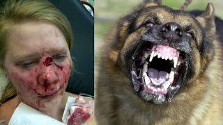 German Shepherd Attacks