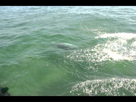 New dolphin species identified