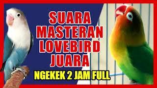 SUARA LOVEBIRD JUARA NGEKEK PANJANG UNTUK MASTERAN 2 JAM NONSTOP