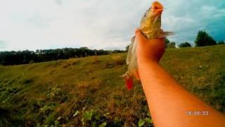 Ловля карпа и карася на макух, горох, пенопласт. [Отчеты о рыбалке](Отличная рыбалка получилась, снасть на горох с макухом работает, главное чтобы рыба подошла) Как я делаю..., 2016-08-14T15:18:09.000Z)