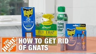How to Get Rid of Gnats | DIY Pest Control | The Home Depot