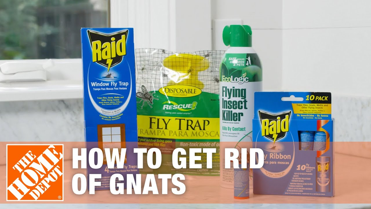 How to Get Rid of Gnats - The Home Depot