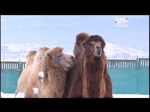 Заграница им поможет: звери из Крыма и армянского Гюмри могут уехать в Европу