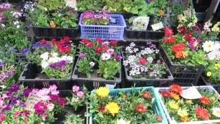 ВЛАДИВОСТОК , цветочная рассада на рынке(, 2016-06-04T00:23:05.000Z)