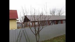 видео Пирамидальная крона у плодовых деревьев. Теоретическая основа