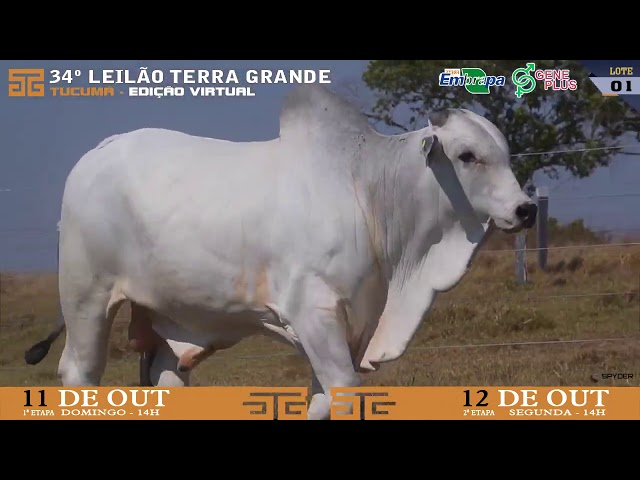 LOTE 001