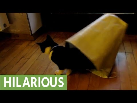Cat's First Paper Bag Experience Ends In Disaster