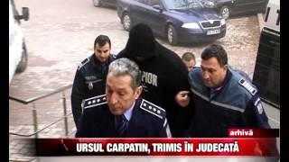Ursul Carpatin, trimis in judecata
