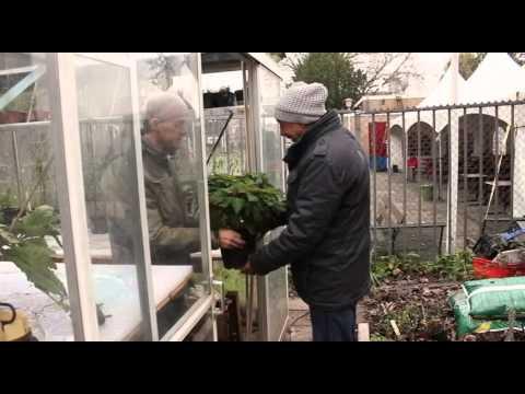 Botanische Tuin Rotterdam : Parel van zuid botanische tuin afrikaanderwijk youtube