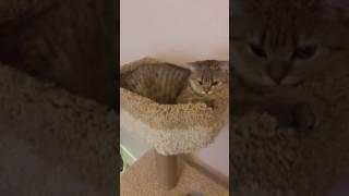 Домик для кошки когтеточка на заказ