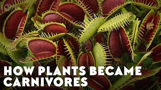 How Plants Became Carnivores