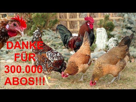 Neuigkeiten + Besuch Bei Verena + Dankeschön Für 300.000 ABOS - Happy Huhn By Robert Höck