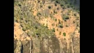 Socotra Island, Yemen - most bizarre ever seen