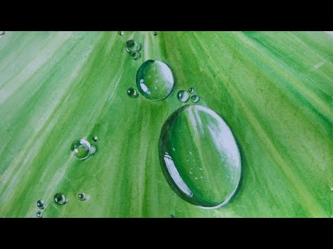 Painting water drops on leaf with watercolour