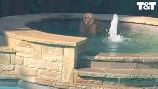 Dog Discovers Hot Tub And Won't Stop Getting In For A Soak