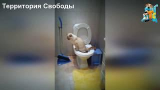 КОТ ПРИУЧЕН К УНИТАЗУ, ХА ХА ХА ПРИКОЛ))