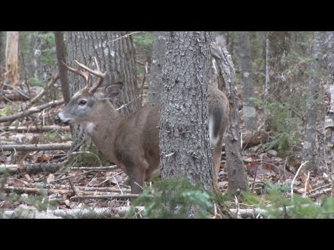 Nova Scotia Eight Point Buck Rifle Kill 2015